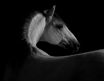 LIPIZZANER my new exhibition and book!