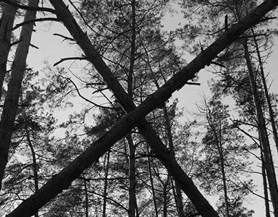 Forest, rhythms