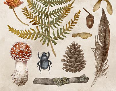 Autumn Illustrations & Print