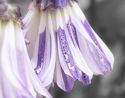 """Painterly"" florals"