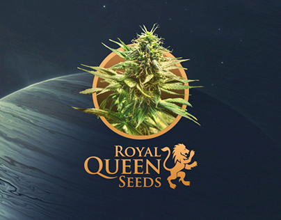 Royal Queen Seeds - Extra THC