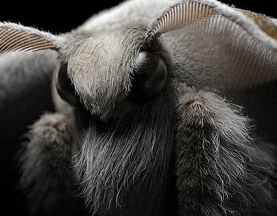 Moth 3D