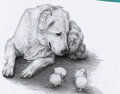kurczaki w akcji :)