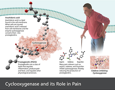 Cyclooxygenase and Pain