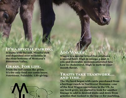 M4 Cattle Company