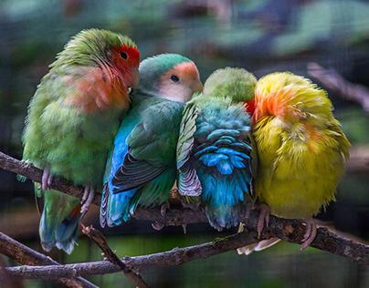 Bird Cuddling Picture