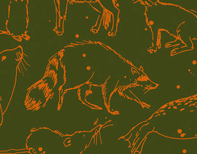 Pattern endpapers non-fiction children's book