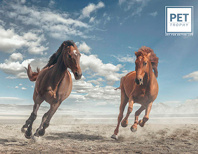 PETTROPHY / Art for better life / HORSES