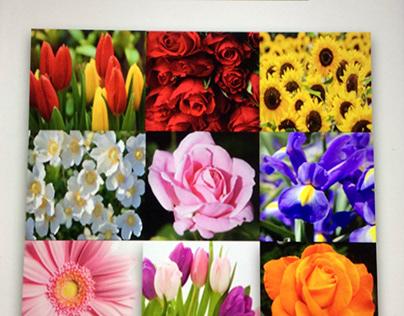 The Flower Pot: Branding