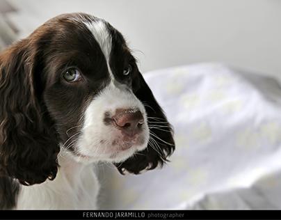 Photography / Fotografía de mascotas