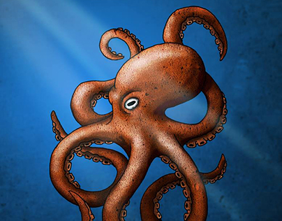 The octopus - 2016