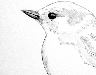 Pencil, Paper and a Bird