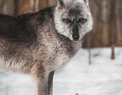 Seneca Park Zoo - 2020