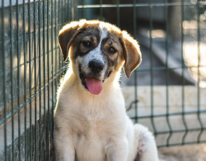 Photography   Mayday Algarve Dog Shelter