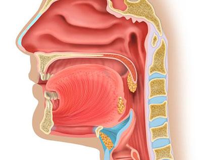 Anatomic and medical illustrations