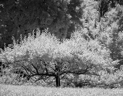 Hidden Lorenzago Infrared - Infrarosso