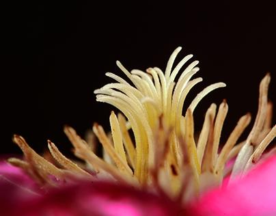 Plants - Rastline