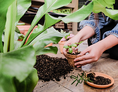 Pangea - Plant Food