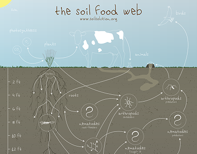 The Soil Food Web