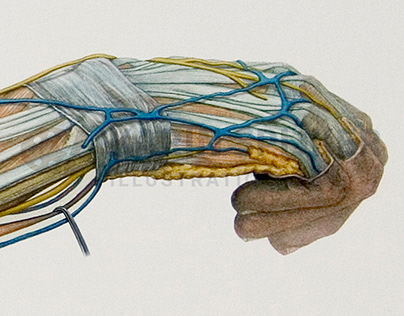 Anatomy of an arm