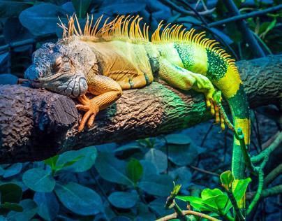 Galerie Photo Zoo de Vincennes (Paris)