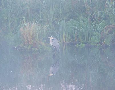 Fugle i tåge