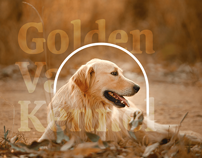 Golden Valley Kennel Branding Concept