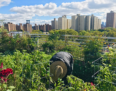 Rooftop orchard provides local families with nutrition