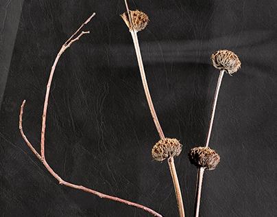 #000.12 - 2019/12 - minimalist flowers