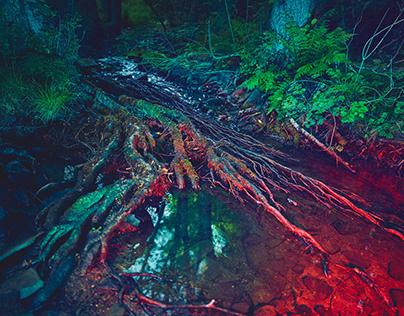 Neon Woods