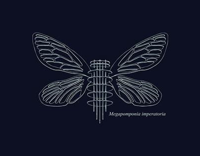 Discover Biodiversity: Empress Cicada