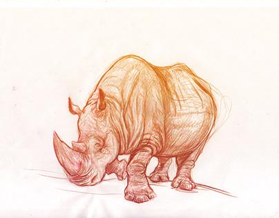 Sketch Animals
