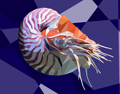 Nautilus Low Poly