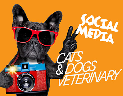 Social Media Cats and Dogs Veterinary