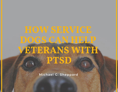How Service Dogs Can Help Veterans With PTSD