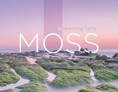 landing on the moss