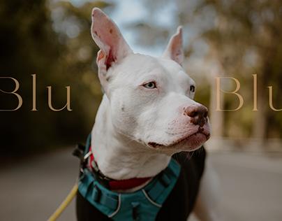Blu, the Deaf Rescue Dog