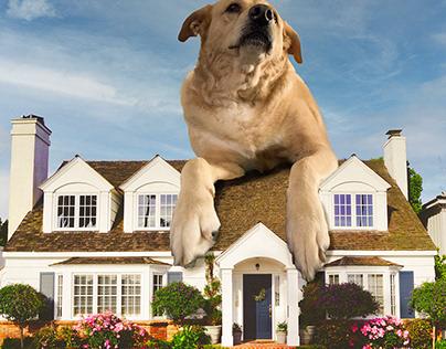 Molly's Dog House