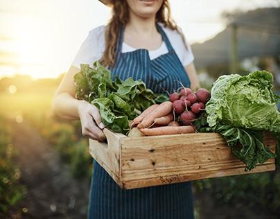 Organic Food: Autumn Harvest