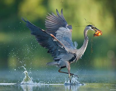 Best Bird Photography