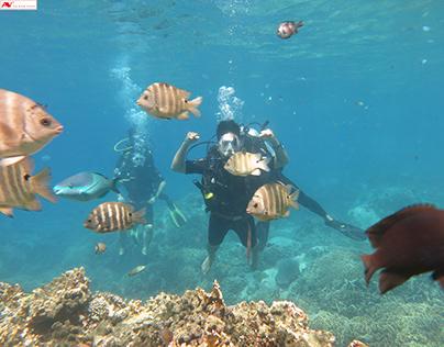 Tour lặn ngắm san hô (Scuba diving trip)