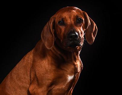 Beautyfull dogs