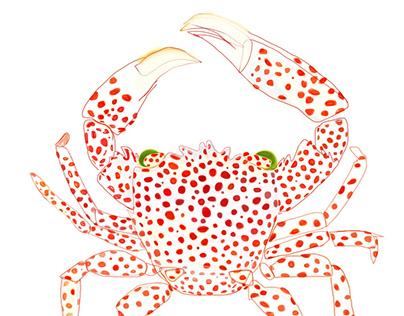 Trapeziid Crabs of Hawai'i
