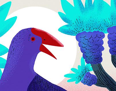 Pukeko Birdo