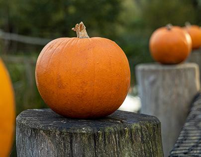 Halloween in zoo