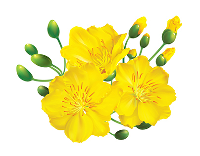 Yellow Apricot Blossoms vector