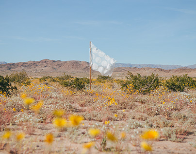 In the Flowers: Desert Super Bloom