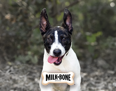 Milk-Bone® Dog Biscuits