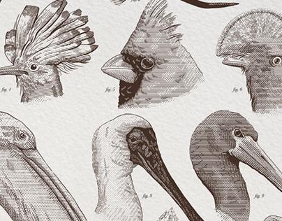 Birds - Poster Illustration