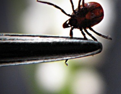 Get help for Lyme disease test and treatment